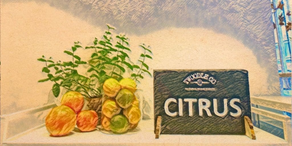 Shop by scent type citrus Twoodle Co Natural Home Scents